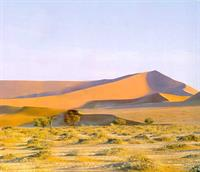 Hyundai собирается озеленить пустыни Китая, фото 1