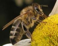 ДТП с пчелами, фото 1