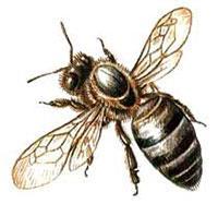 Авария с участием 12 миллионов пчел, фото 1