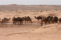 «Новый» Тунис принимает участников двух мировых Серий по ралли-рейдам!, фото 5