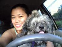 Обучение собак вождению чревато аварией, фото 1